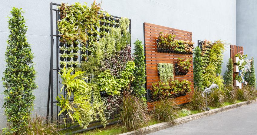 La realizzazione di un giardino verticale: passando per la manutenzione