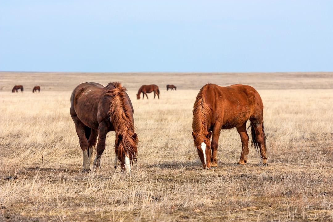 Integratori per cavalli, l'alimentazione complementare indispensabile